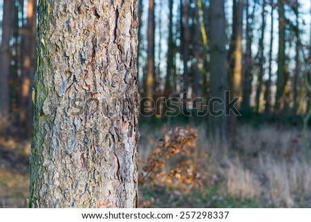 Spruce tree trunk aligned to the left of the image with empty space for your text on right - stock photo