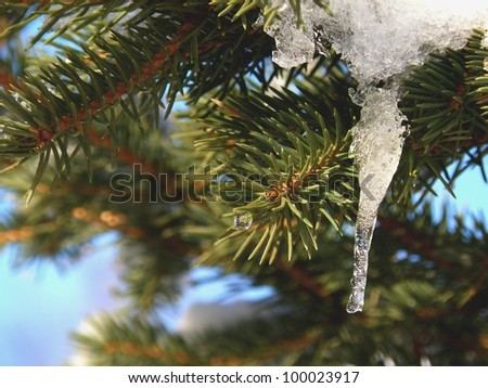 Spruce Tree with Hanging Ice - stock photo