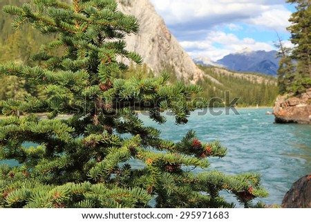 Spruce tree with the natural blurred background of Rocky mountains and Bow river. Banff National Park (Alberta, Canada) - stock photo