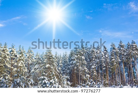 Spruce trees covered by snow on a sunny winter day - stock photo