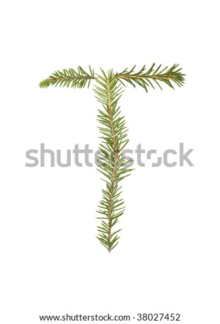 Spruce twigs forming the letter 'T' isolated on white - stock photo