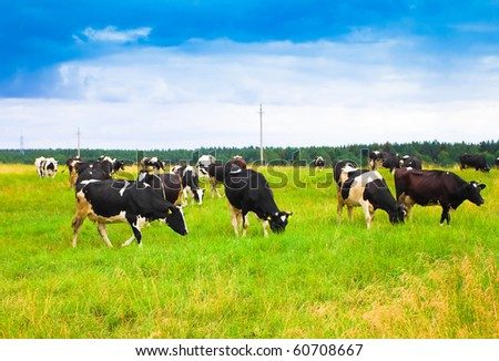 Squad of Cute Cows - stock photo