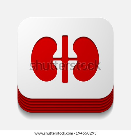 square button: kidneys - stock photo