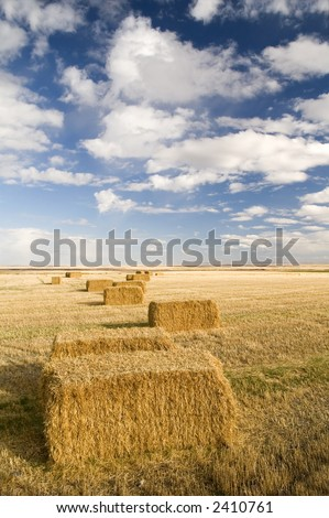 Square hay bales in a farmers field under a blue sky. - stock photo