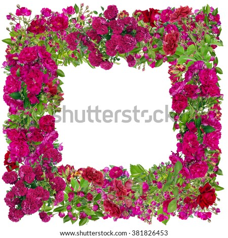 Square photo frame made from pink summer roses branches buds and flowers. Abstract isolated collage - stock photo