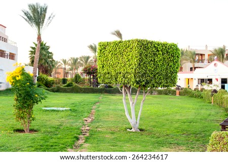Square topiary tree in Egyptian formal garden. Sharm-el-sheikh. Summertime outdoors. - stock photo