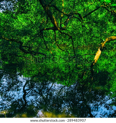 Square vivid indian jungle forest water reflections background backdrop - stock photo