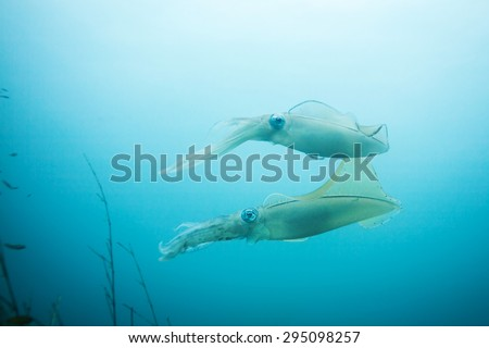 squid - stock photo