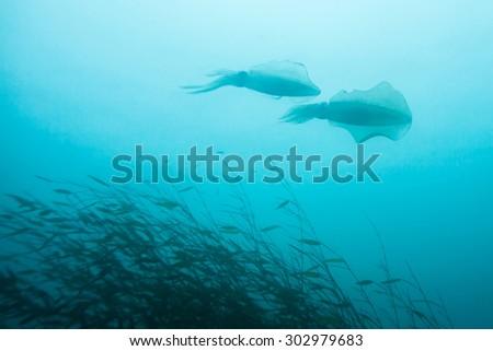 squid - stock photo