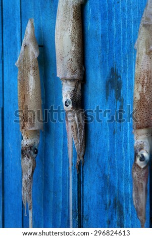 squid calamari fresh seafood on a blue rustic wooden wall - stock photo