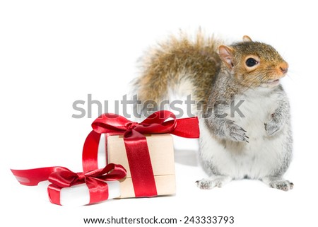 Squirrel and gift boxes on white background  - stock photo