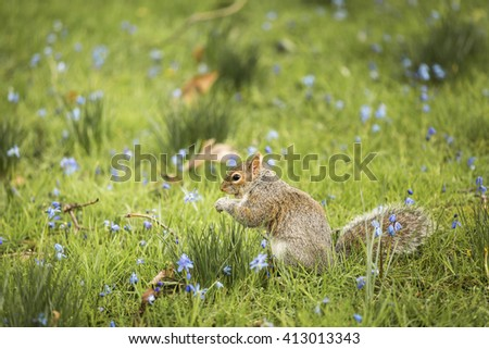 Squirrel at the nature - stock photo
