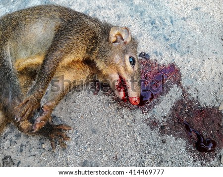 http://thumb101.shutterstock.com/display_pic_with_logo/4024045/414469777/stock-photo-squirrel-dead-lay-on-road-by-car-accident-male-squirrel-s-tail-bunch-414469777.jpg