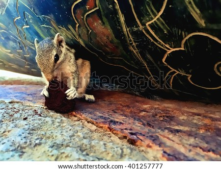Squirrel eating a cookie, striped squirrel or palm chipmunk in a shelter in old tower fed by tourist, indian animal wild palm squirrel, striped fur squirrel, hungry chipmunk, lovely squirrel outdoor,  - stock photo