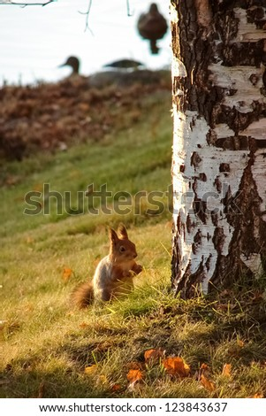 Squirrel eating in a park - stock photo