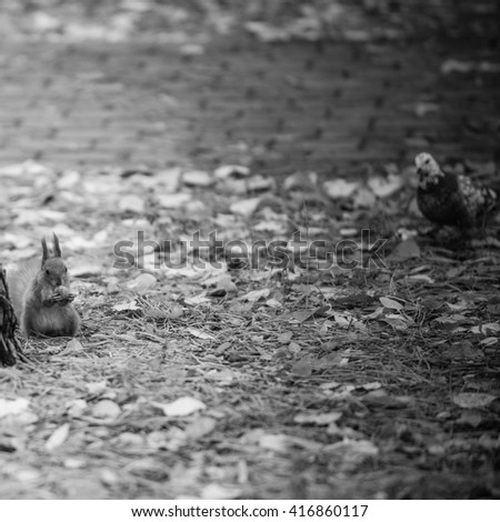 Squirrel eating nut and dove. Black-and-white picture - stock photo