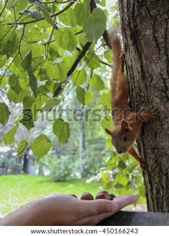 squirrel in a tree in the summer park