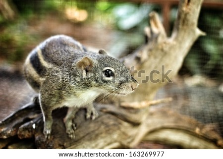Squirrel in the cage. - stock photo