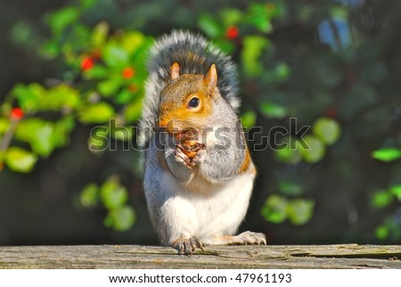 Squirrel in the DC - stock photo