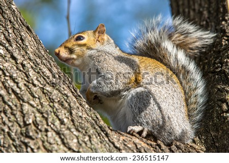 Squirrel in Washington DC. - stock photo