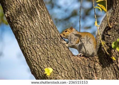 Squirrel in Washington DC. - stock photo