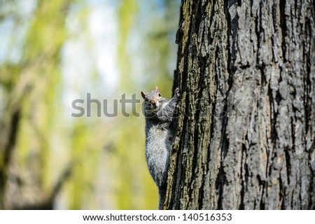 Squirrel looking - stock photo