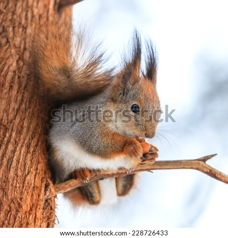 Squirrel on a branch - stock photo