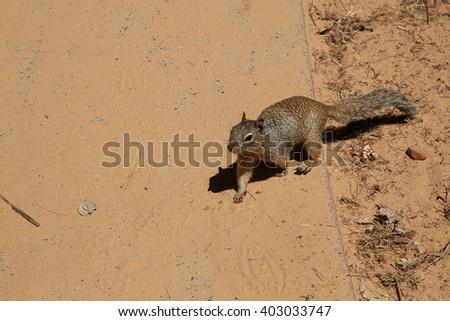 Squirrel on a dirt path. - stock photo