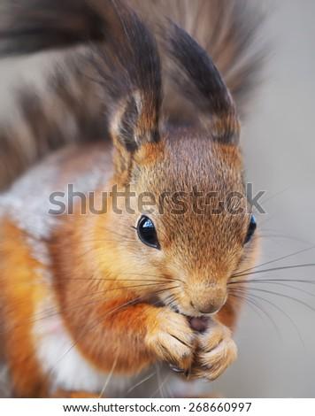 squirrel on a feeding trough - stock photo
