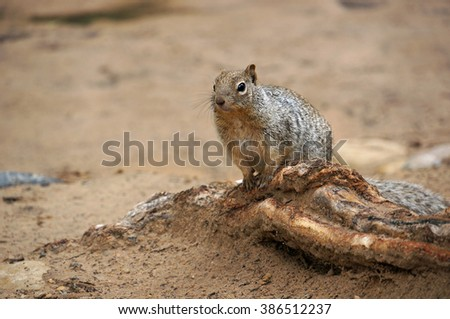 Squirrel on a root - stock photo