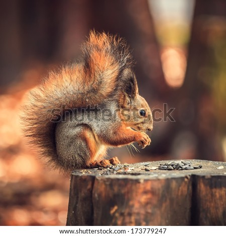 Squirrel on a stump with seeds. - stock photo