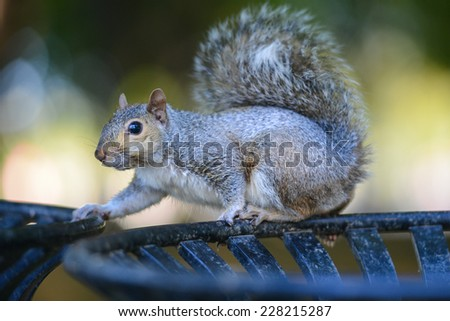Squirrel poses on trash bin - stock photo
