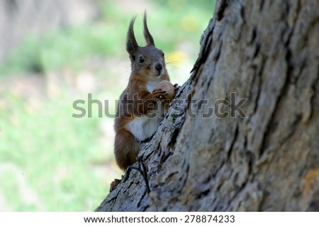 Squirrel sitting on a tree - stock photo