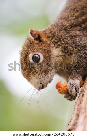 Squirrel sitting on the tree - stock photo