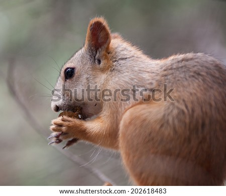Squirrel. Squirrel eats on tree in the park  - stock photo