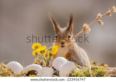squirrel with seed in mouth standing with flowers and eggs - stock photo