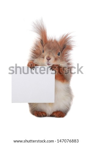 squirrel  with sheet for a text writing - stock photo