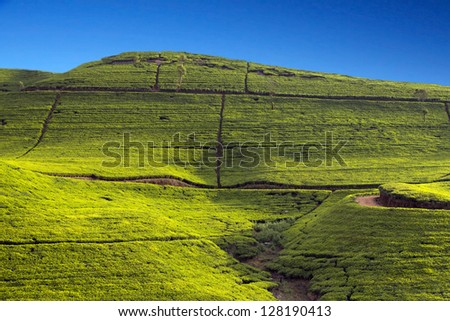 Sri Lanka tea garden mountains in nuwara eliya - stock photo