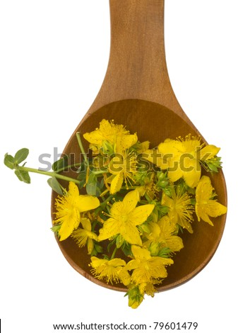 St. John's wort in the wooden spoon isolated - stock photo