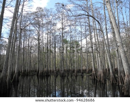 St. Johns River Swamp  Florida - stock photo