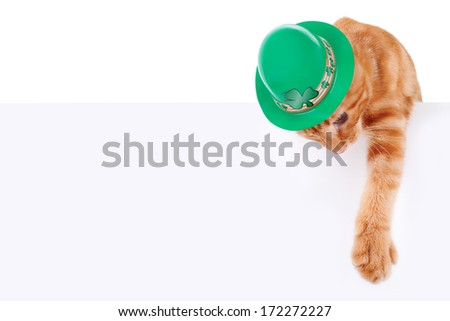St. Patrick's Day cat holding sign or banner isolated on white - stock photo