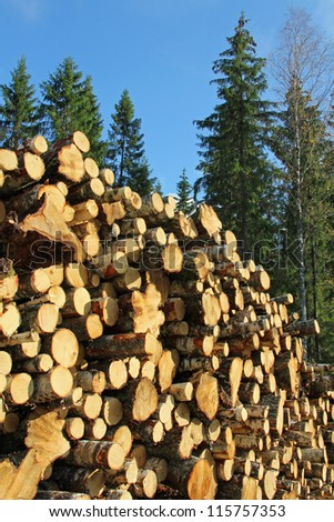 Stack of birch wood logs and tall spruce trees against blue sky. - stock photo