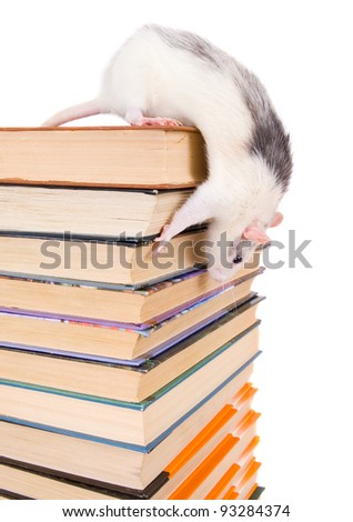 Stack of books and rat isolated - stock photo