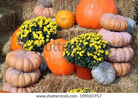 stack of decorative bumpy gourd for Fall season  - stock photo