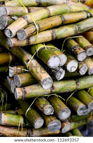 Stack of Fresh sugar cane sticks - stock photo