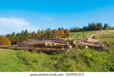 Stack of freshly cut tree logs - stock photo