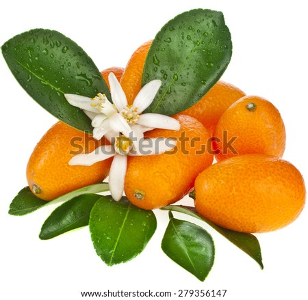 Stack of kumquat citrus fruit flowering close up isolated on white background - stock photo