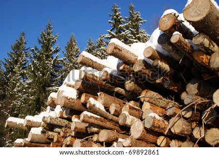 Stack of Logs in Winter Spruce Forest - stock photo