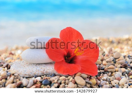 Stack of pebbles and flower at the beach - stock photo