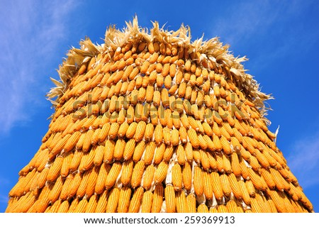 stack of ripe corn with blue sky - stock photo